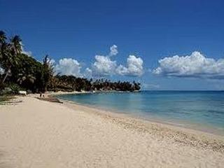 Barbados Sungold House Croton