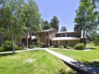 Pines 4038 - image