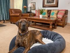 Dog-friendly 2Br/3Ba at the Lodge At Vail! Next To Gondola